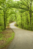 Road through state forest. Royalty Free Stock Photo
