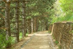 The road of stone. On the mountain slope in the Pine Forest Stock Photography