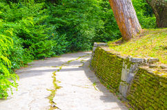 The road with stone fence. Passes tree Stock Photos