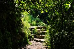 Road and stone stairs in magical and mysterious dark forest. Fairy tale concept royalty free stock photo