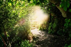 Road and stone stairs in magical and mysterious dark forest with mystical sun light. Fairy tale concept.  stock images