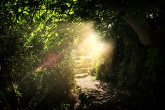 Road and stone stairs in magical and mysterious dark forest with mystical sun light. Fairy tale concept.  royalty free stock image