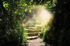 Road and stone stairs in magical and mysterious dark forest with mystical sun light. Fairy tale concept royalty free stock photos
