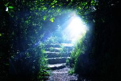 Road and stone stairs in magical and mysterious dark forest with mystical sun light. Fairy tale concept.  stock photos