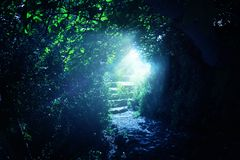 Road and stone stairs in magical and mysterious dark forest with mystical sun light. Fairy tale concept.  stock image