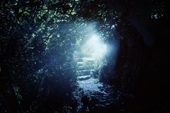Road and stone stairs in magical and mysterious dark forest with mystical sun light. Fairy tale concept royalty free stock image