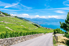 Road, stone wall and wine fields in the Lavaux Vineyards. Royalty Free Stock Photo