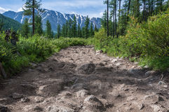 Road stones forest mountain Royalty Free Stock Photos