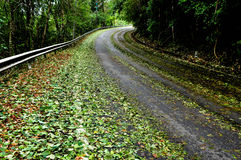 Road after storm with halistone Royalty Free Stock Photo