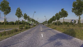 Road. Straight road edged with trees and street lanterns Royalty Free Stock Photography
