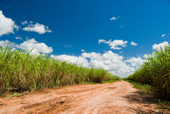 Road for the Sugar Cane Field. Brazil produces about one-third of the sugarcane production in the world royalty free stock photography