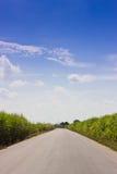 Road between sugar cane fields. Stock Photos