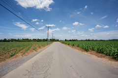 Road in sugarcane farm with blue sky Stock Photos