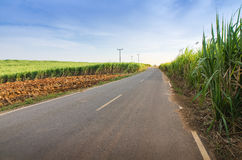 Road and Sugarcane field agriculture tropical farm landscape Stock Photography