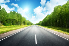 Road in summer forest Royalty Free Stock Photography