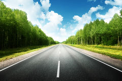 Road in summer forest Royalty Free Stock Photos