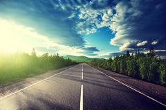 Road in summer forest Stock Photography
