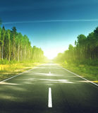 Road in summer forest Stock Photos