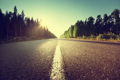 Road in summer forest Royalty Free Stock Image