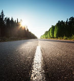 Road in summer forest Stock Images