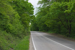 Road in summer forest. Landscape with a road in the spring forest Royalty Free Stock Image