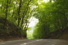 Road in summer forest. Landscape with a road in the spring forest Stock Image