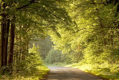 Road through summer forest at sunrise Stock Photos