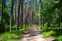 Road in summer green forest. Royalty Free Stock Photos
