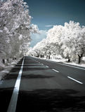 Road in summer photographed in infrared Royalty Free Stock Photo