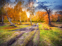 Road from summer to autumn Royalty Free Stock Photos