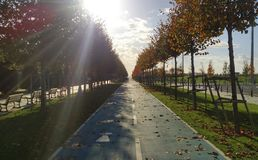 Way & sun & Trees in autumn. Road and sun with trees in autumn Stock Image