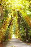 The road in sun beams between tropical trees. Mauritius Royalty Free Stock Photo