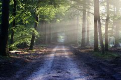 Road, Sun, Rays, Path, Forest Stock Image