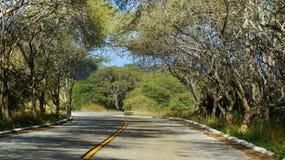 Road of The Sun & x28;Ruta Del Sol& x29;. Coast road under tired trees in Manabi, Ecuador Royalty Free Stock Photography