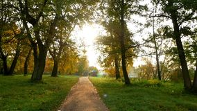 Forest sun nature autumn. Road and sunbeams in fog in the forest stock footage