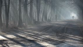 Road and sunbeams in strong fog in the forest, Poland. Road and sunbeams in strong fog in the forest, Poland stock video
