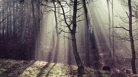 Road and sunbeams in strong fog in the forest, Poland. stock video