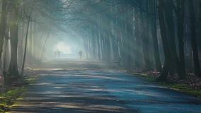 Road and sunbeams in strong fog in the forest, Poland. Road and sunbeams in strong fog in the forest, Poland stock footage
