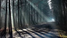 Road and sunbeams in strong fog in the forest, Poland. stock footage