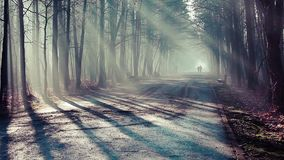 Road and sunbeams in strong fog in the forest, Poland. Road and sunbeams in strong fog in the forest, Poland stock video footage