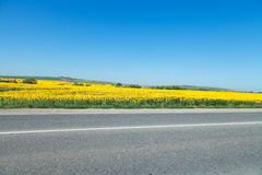 Road and sunflower fields in Caucasus Royalty Free Stock Images