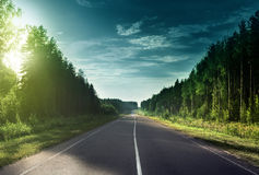 Road in sunny forest Royalty Free Stock Photography