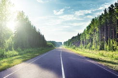 Road in sunny forest Royalty Free Stock Photo