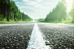 Road in sunny forest Stock Photo