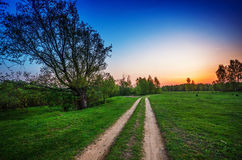 Road in sunset field Stock Images