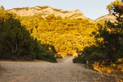 The road at sunset through the junipers royalty free stock images