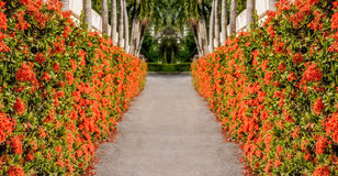 The road surrounded by flowers Royalty Free Stock Photography