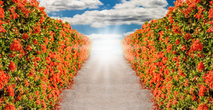 The road surrounded by flowers Stock Image