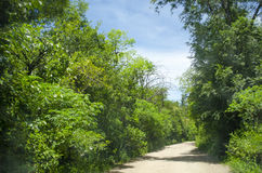Road surrounded by green vegetation Royalty Free Stock Images