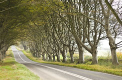 Road surrounded by old trees Stock Image